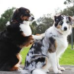 Things to know about choosing the best groomer for your dog
